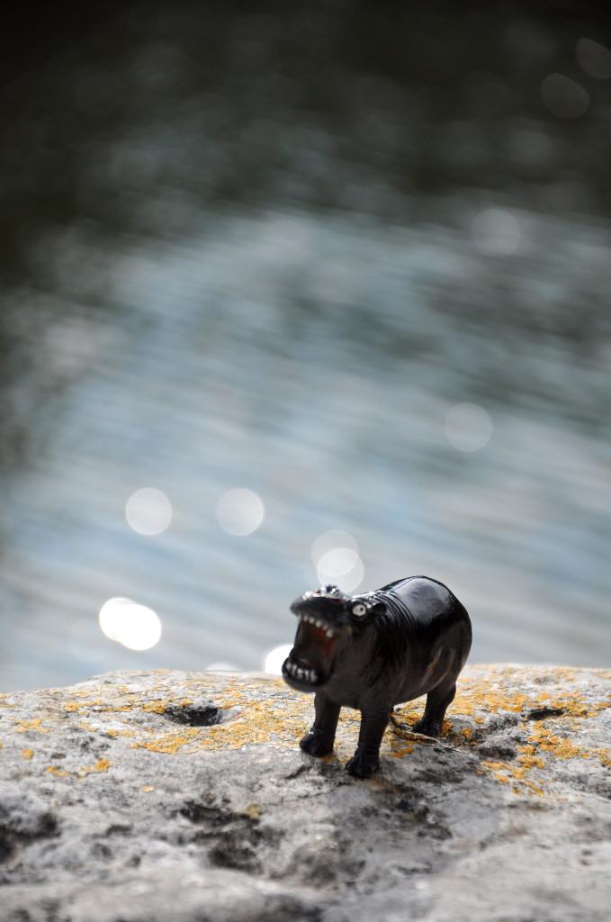 Ippopotami a Bagno Vignoni